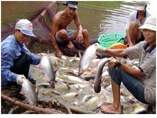 Cá tra có thể bị áp thuế bán phá giá ít nhất 5 năm nữa
